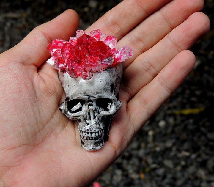 Crâne de Pata E Perro
